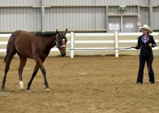 lph-shows-potential-yearling-on-lunge-sizzler-2016